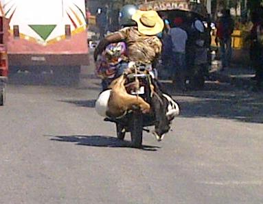 One rider, one passenger with big bag and TWO goats