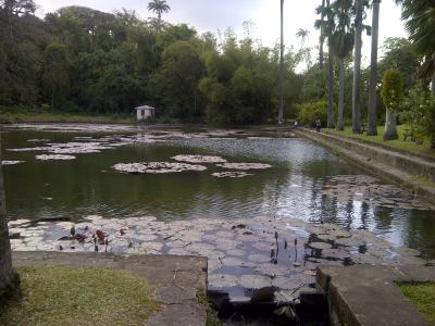 The massive lily pond