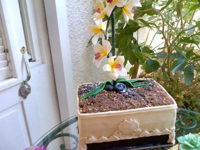 orchid plant cake, barbados culinary skills