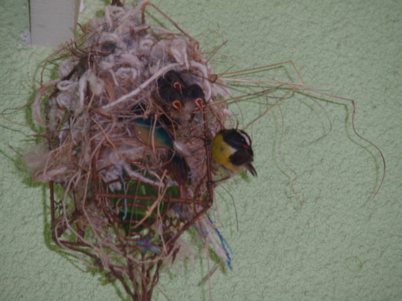 baby birds with mother