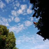 Trees and clouds