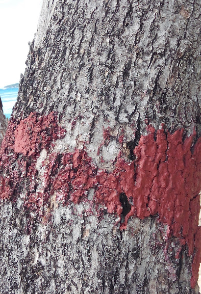 Tree trunk with paint